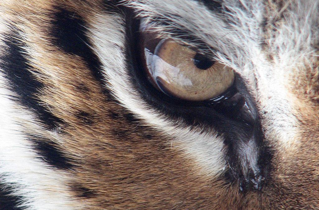 Asijští tygři v boji proti Covid-19